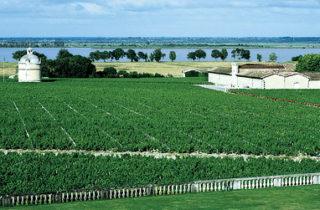 Les grands crus de Bordeaux 2009 devraient être bénis des dieux.