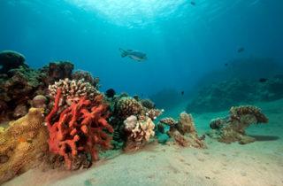 Comment sauver les océans ?