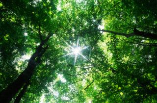 Petite révolution sous les arbres