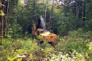 Les défis du régime forestier