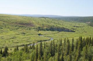 Forêts : le péril russe