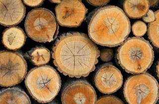 Planète forêts