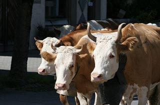 Même si la consommation de viande diminue dans les pays riches, cela ne changera