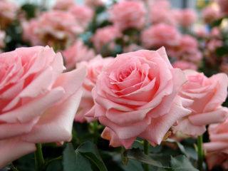 15 fleuristes du Québec où se procurer des fleurs équitables