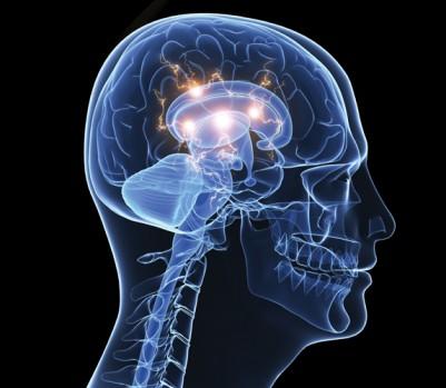 cerveau-istock