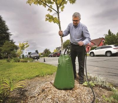 À Vancouver, fournir de l'eau à un jeune arbre demande de l'ingéniosité. (Photo : Harrison Ha/Xinhua/La Presse Canadienne)