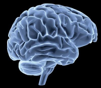 cerveau-petit