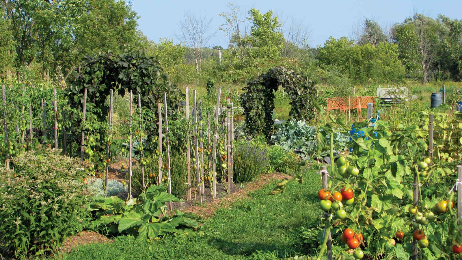 Quand le jardin devient intelligent l 39 actualit for Jardin de jardiniers