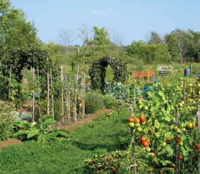 Jardin potager permaculture