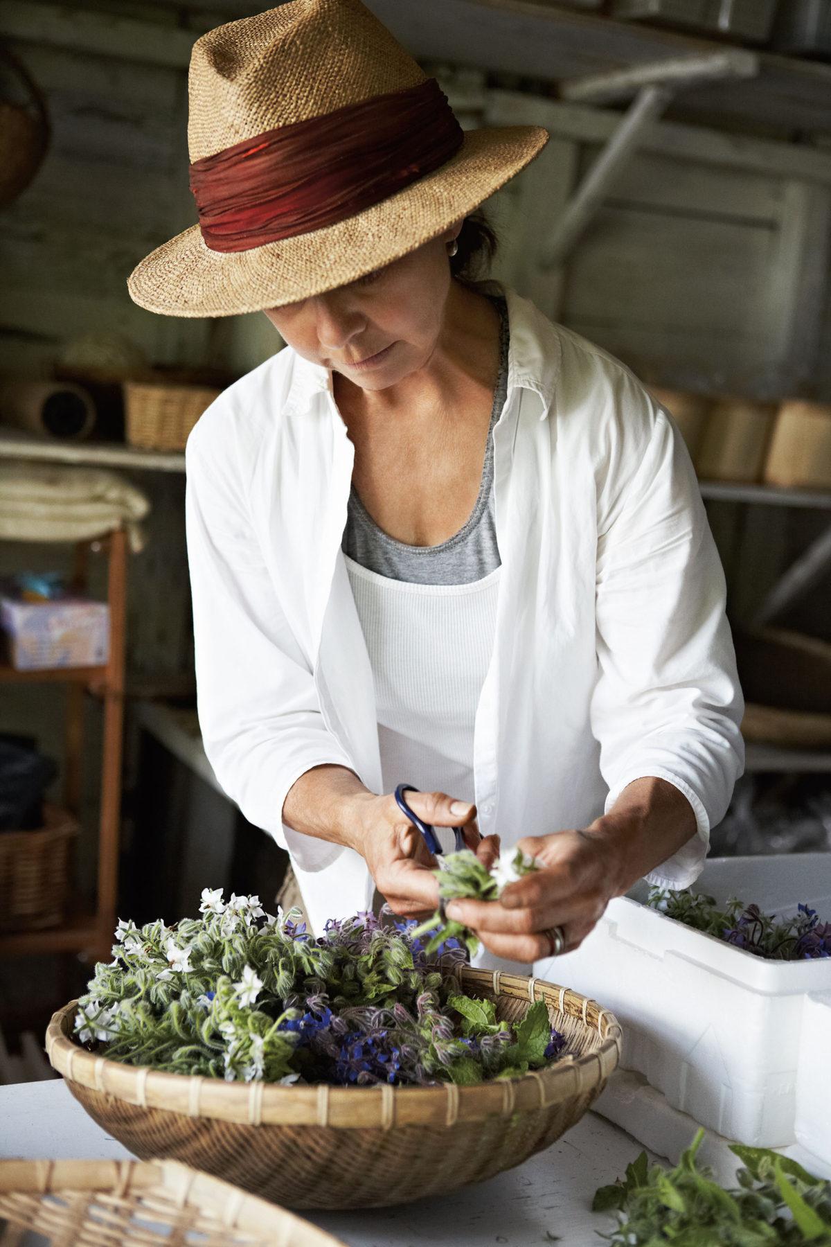 Graines De Fleurs Qui Poussent Très Vite fleurs à croquer | l'actualité